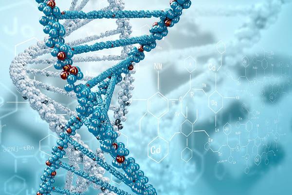 Человеческое ДНК и его влияние на судьбу человека